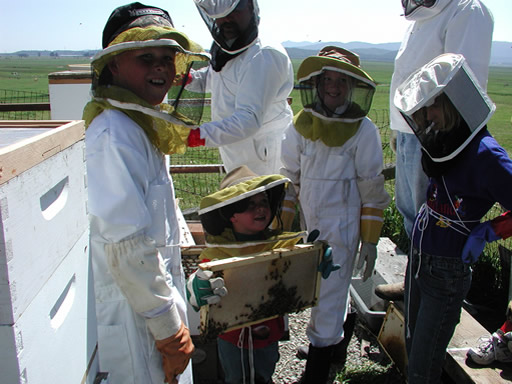 4-H children opening a beehive